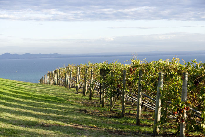 Bellarine Peninsula wine tours